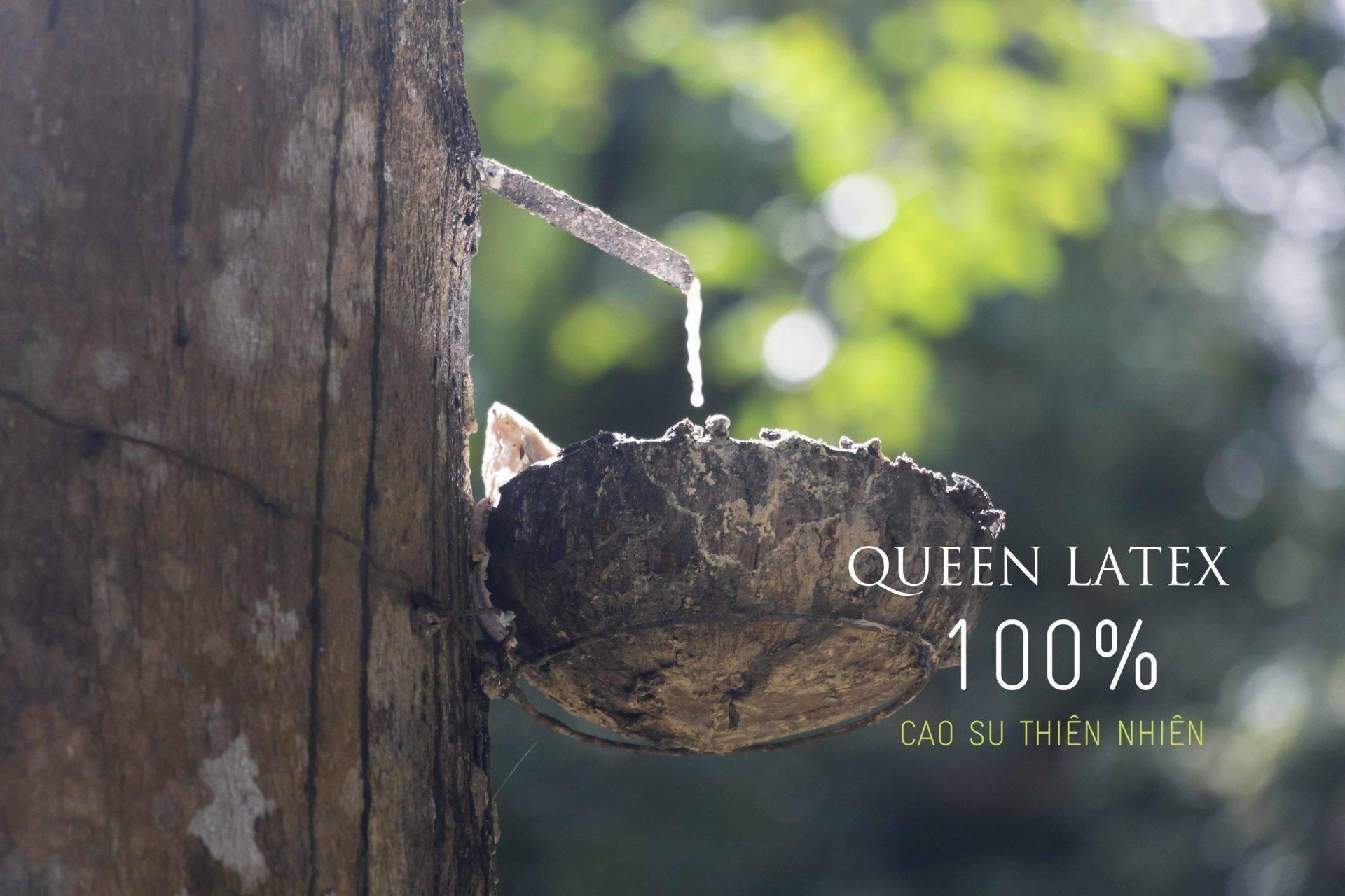 Queen latex 100% cao su thiên nhiên